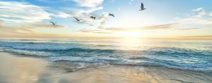 Image of birds flying above the beach